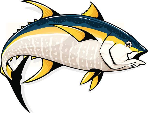 yellowfin tuna vector art illustration