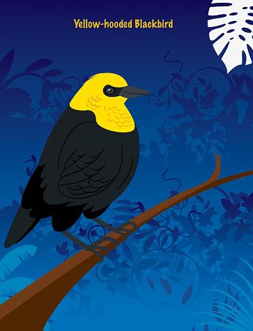 Yellow-Hooded Blackbird