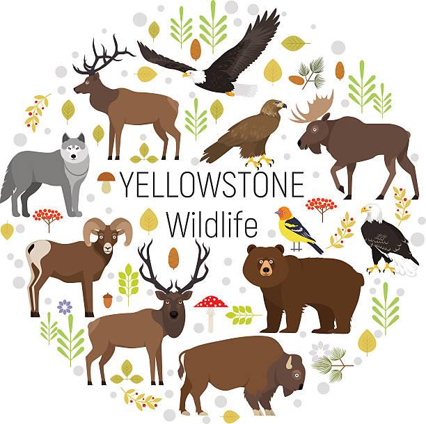 Yellowstone animals moose, elk, bear, wolf, eagle, bison  circle set - ilustración de arte vectorial