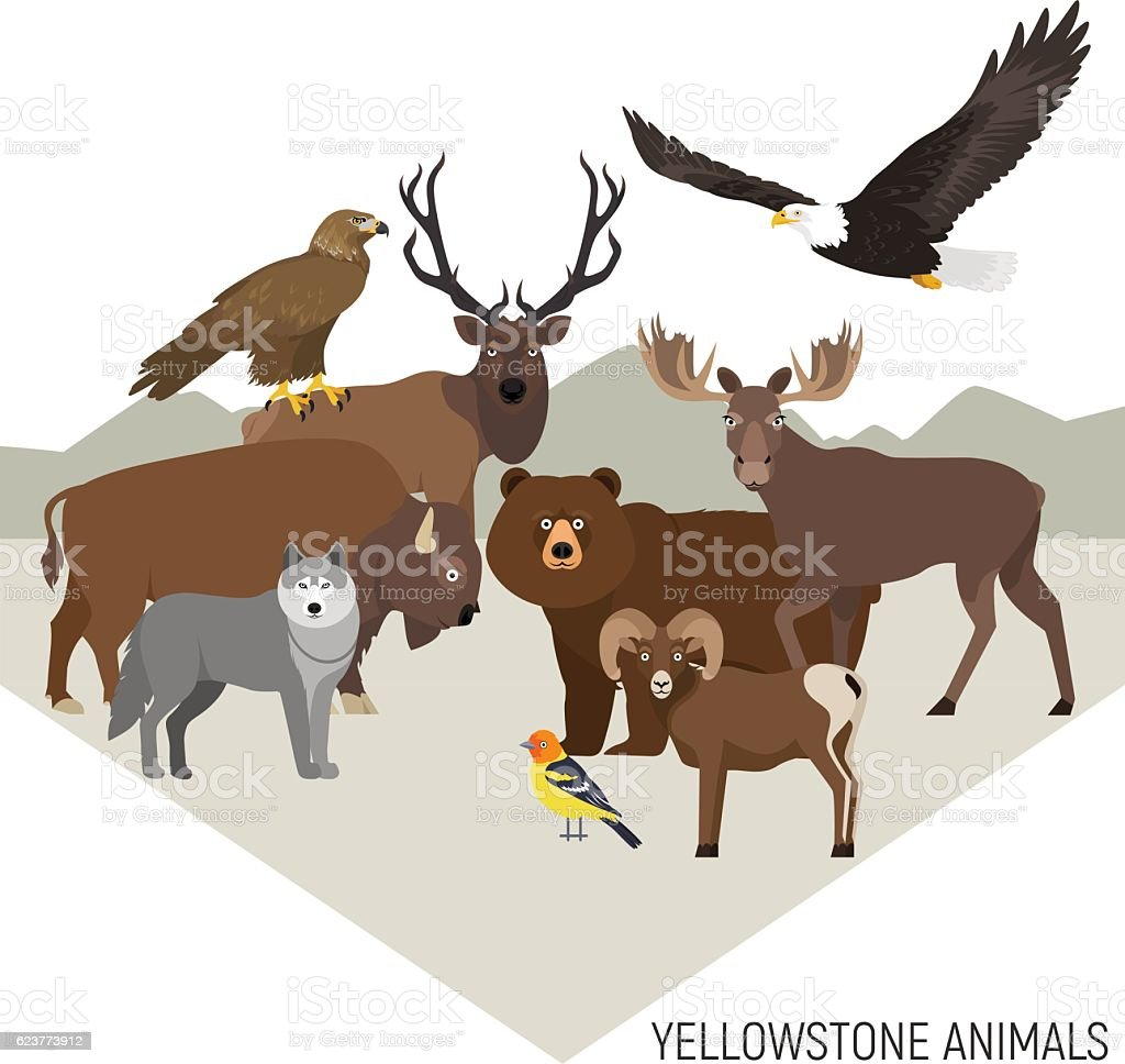 Yellowstone National Park animals grizzly, elk, wolf, eagle, bighorn sheep Yellowstone National Park animals composition with grizzly, moose, elk, bear, wolf, golden eagle, bison, bighorn sheep, bald eagle, western tanager, isolated on transparent background American Bison stock vector