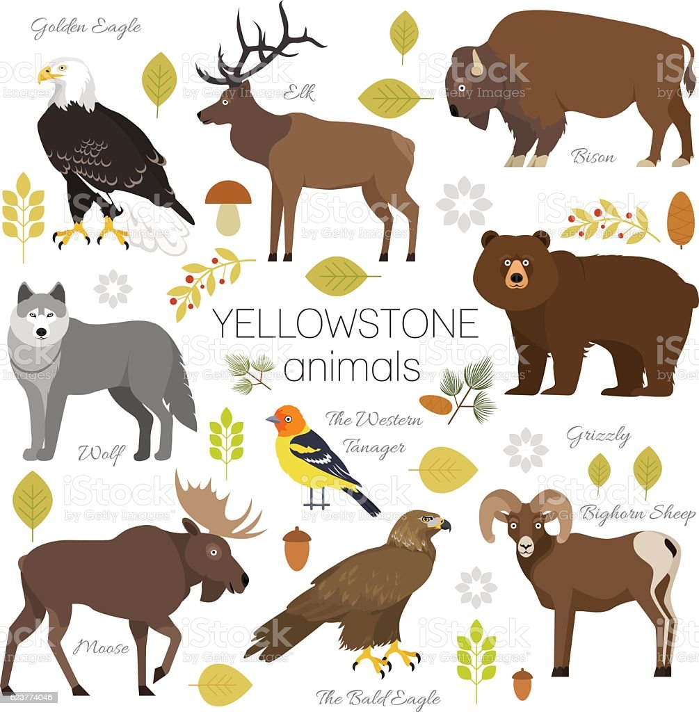 Yellowstone Park Animals Set Moose Elk Bear Wolf Eagle Bison Stock