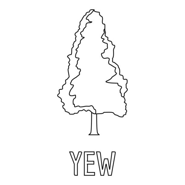 Royalty Free Yew Tree Clip Art, Vector Images ...