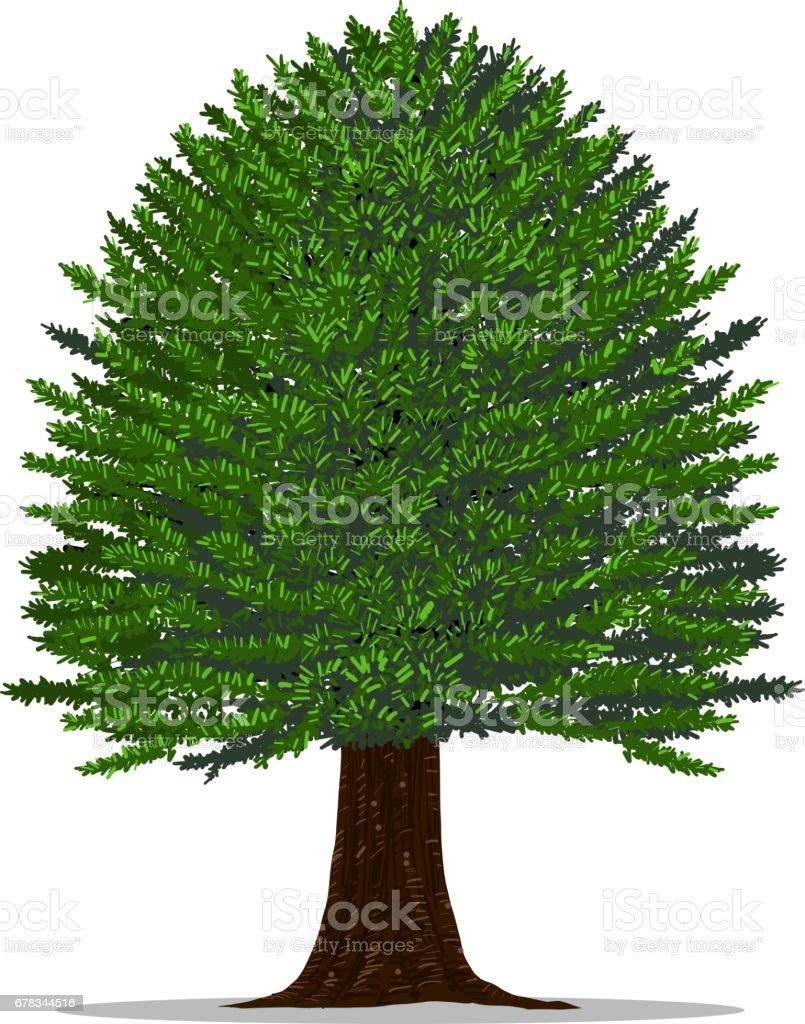 Yew tree on white background. vector art illustration