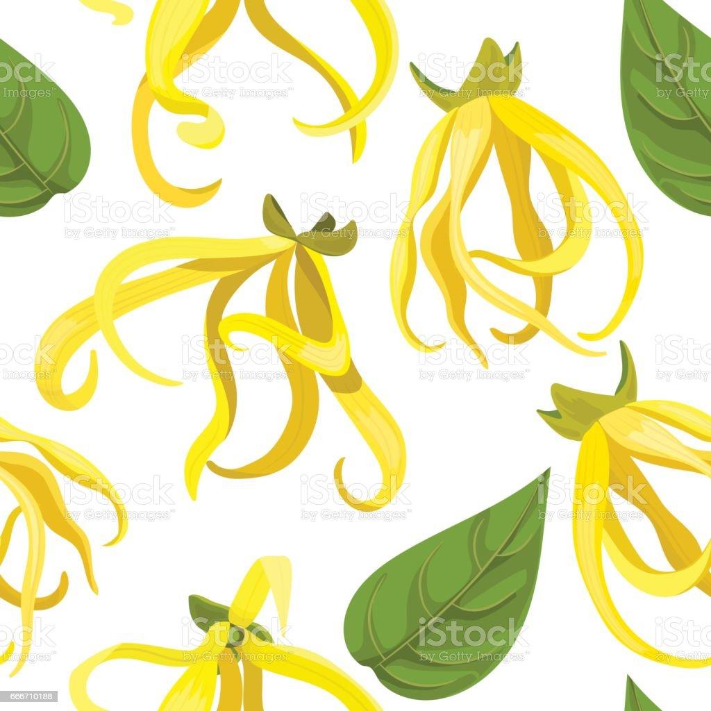 Ylang-Ylang tropical flower Cananga odorata . seamless pattern vector vector art illustration