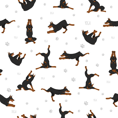 Yoga dogs poses and exercises seamless pattern design. Doberman clipart