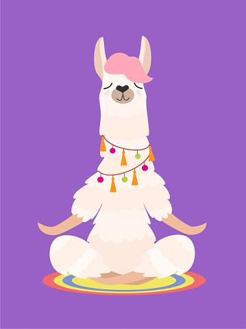Yoga llama meditates isolated on purple background. Vector illustration.