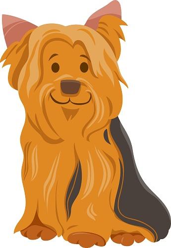 york or yorkshire terrier dog cartoon character