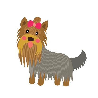 Yorkshire Terrier dog animal cartoon character vector illustration.