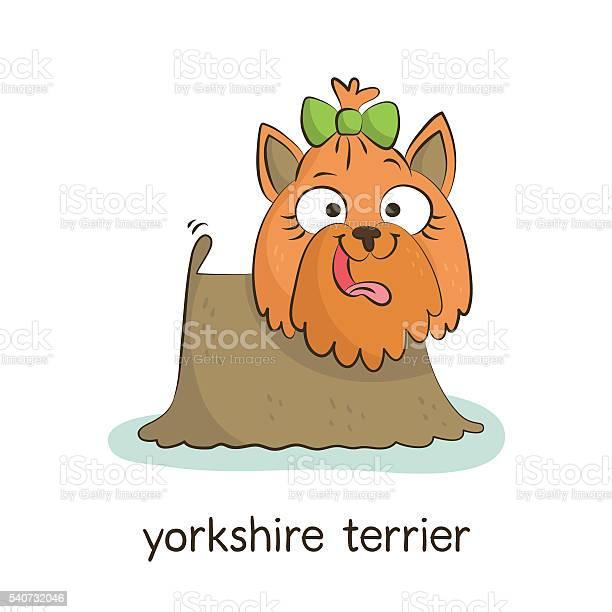 Yorkshire terrier dog character isolated on white vector id540732046?b=1&k=6&m=540732046&s=612x612&h=yzftvfyeptevz9ain2dhfjvzikjpkdsgptjkml4ve20=