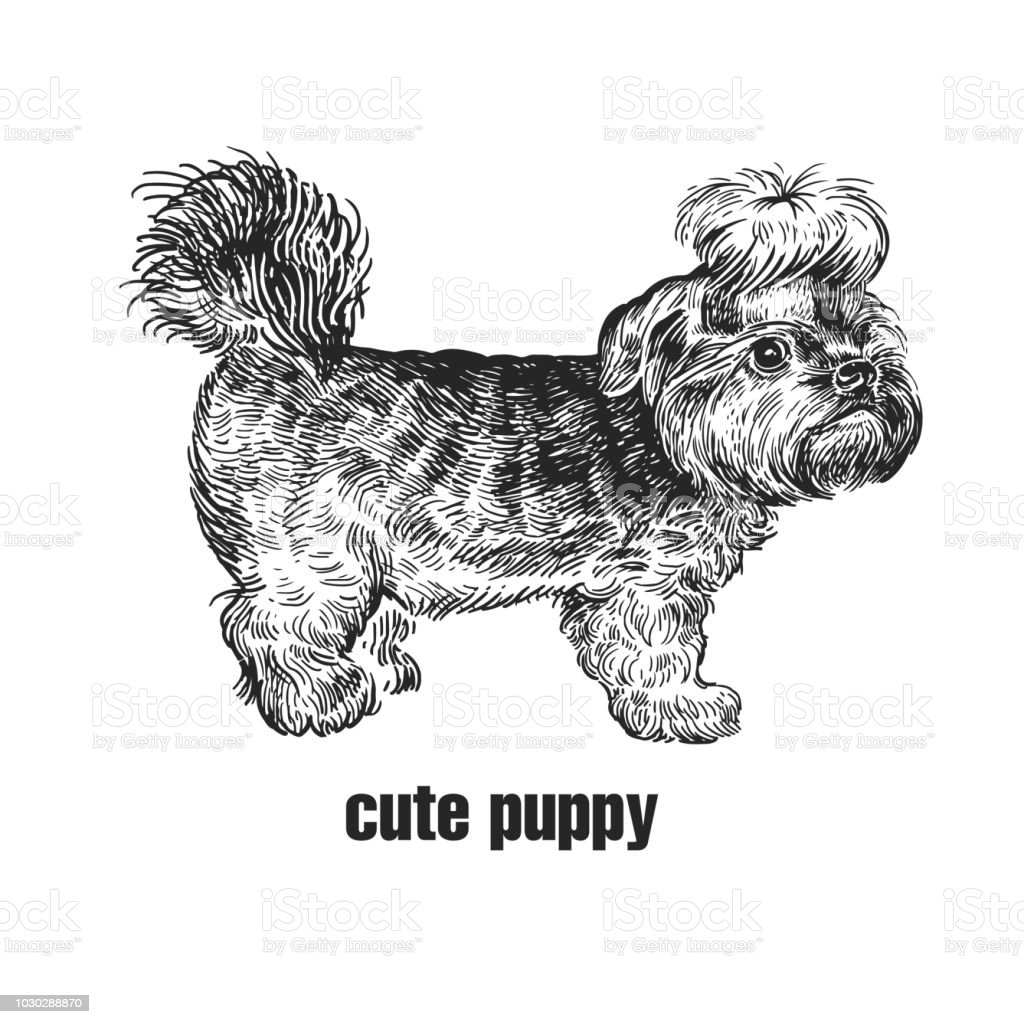 Yorkshire Terrier Dog Cute Puppy Black And White Hand Drawing Stock Illustration Download Image Now Istock