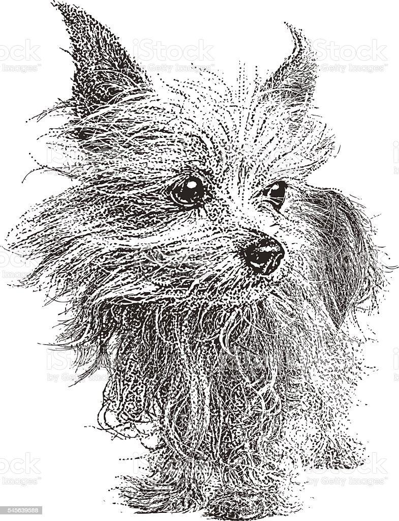 Yorkshire Terrier Dog. Isolated on white. vector art illustration