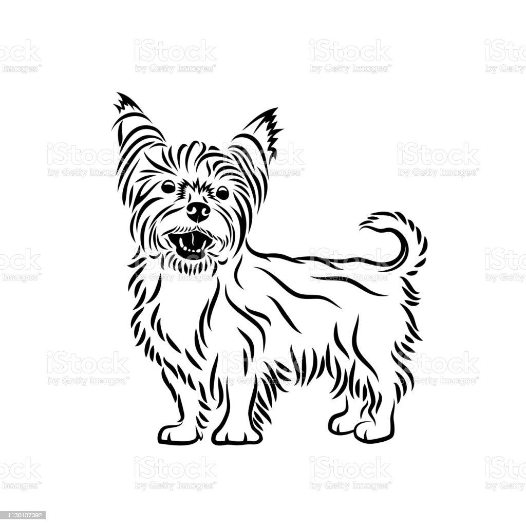 Ilustración De Yorkshire Terrier Perro Aislados Ilustración