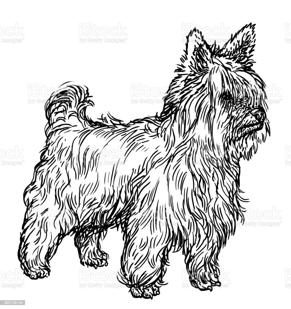Line Drawing Of Yorkshire Terrier : Yorkshire terrierillustration zeichnung gravur tinte