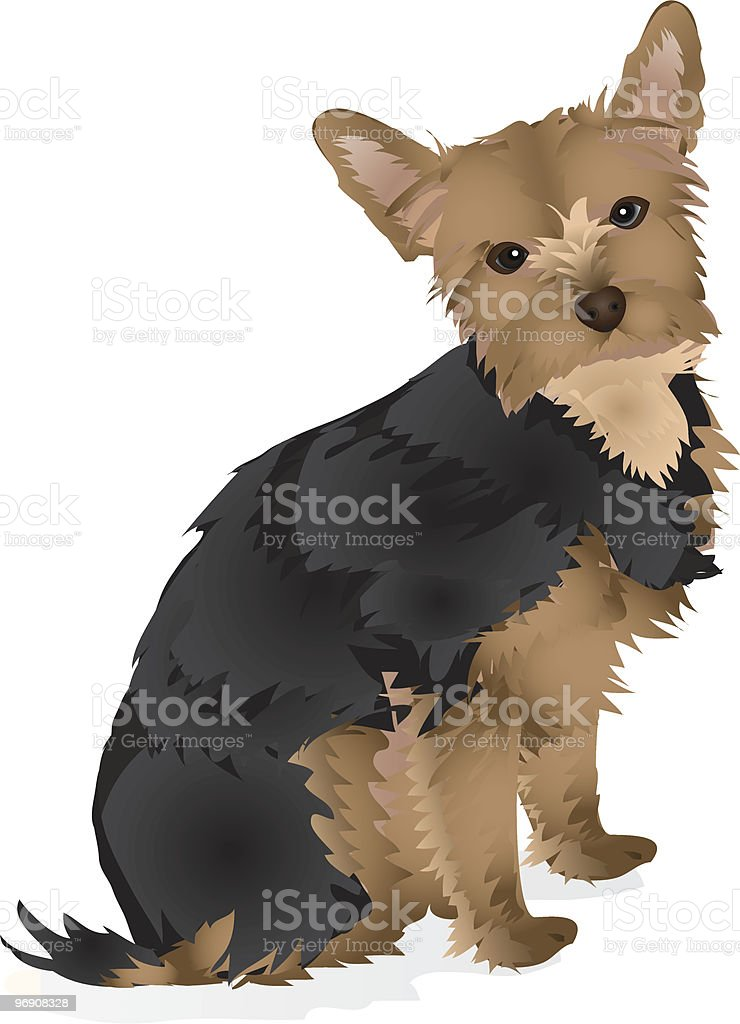 Yorkshire Terrier royalty-free yorkshire terrier stock vector art & more images of animal