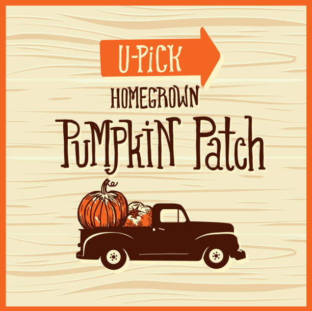 You pick pumpkin patch wooden sign with old fashioned truck on wooden background Vector illustration of a You pick pumpkin patch sign with old fashioned truck picking harvesting stock illustrations