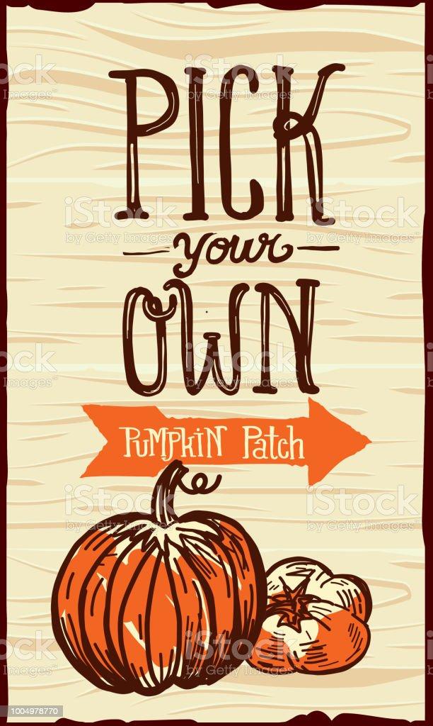 Pick-your-own pumpkins at belltown hill orchards' u-pick pumpkin.
