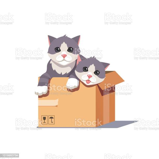 Young and adult pet kitties sitting inside cardboard box kitten vector id1019950794?b=1&k=6&m=1019950794&s=612x612&h=zglpa43qdy8du2hbzkjvis ghjsloj2ua6iq2lmx1cy=