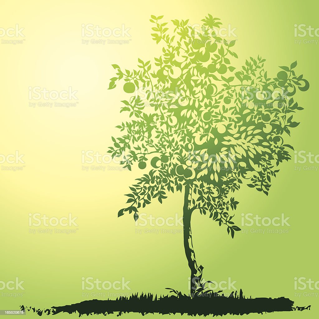 young apple tree royalty-free young apple tree stock vector art & more images of apple - fruit