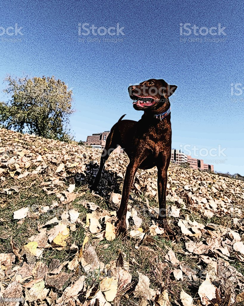 A young Chocolate Labrador Retriever enjoying the outdoors - Royalty-free Agricultural Field stock vector