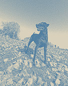 Pen and ink stipple illustration of a strong young Chocolate Labrador Retriever enjoying an autumn day outdoors.