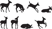 Young Deer Silhouette Collection