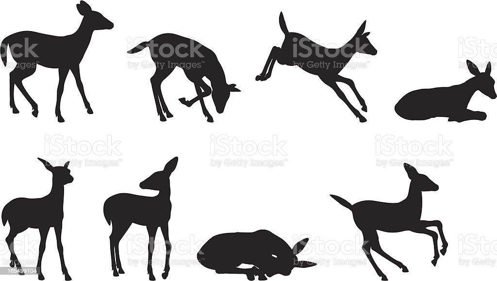 Jeune Collection de Silhouette de cerf - Illustration vectorielle