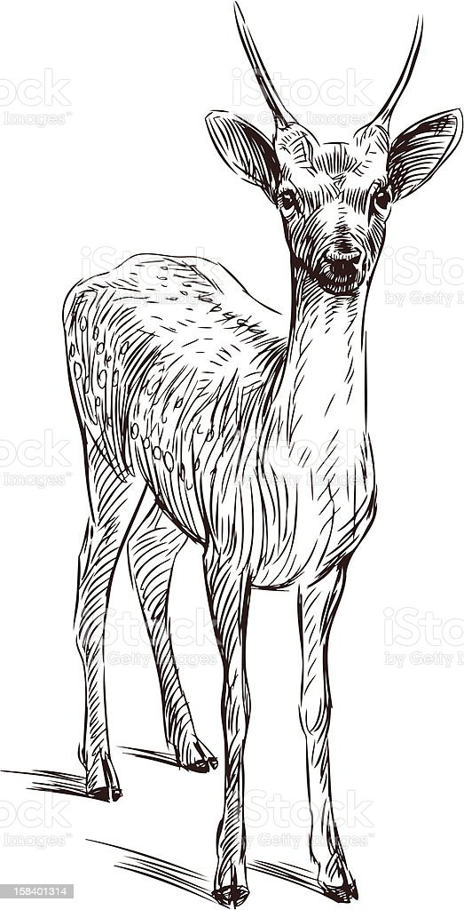 young deer royalty-free young deer stock vector art & more images of animal