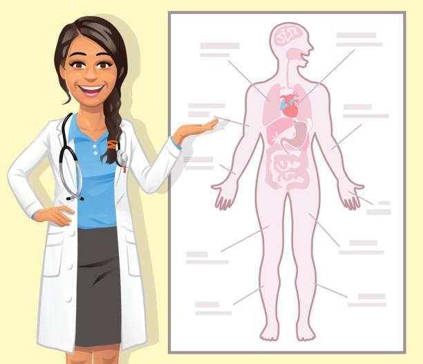 młoda kobieta lekarz wyjaśniając ludzkie ciało - ludzkie części ciała stock illustrations