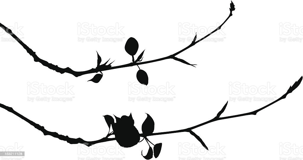 Young Leaves royalty-free stock vector art