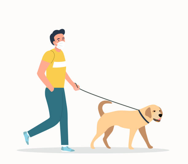 Young  man wearing face masks walking with a dogs isolated. Vector flat style illustration vector art illustration