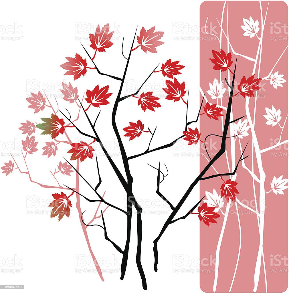 Young Maple Tree royalty-free stock vector art