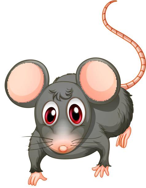 unique characteristics of brown rats that
