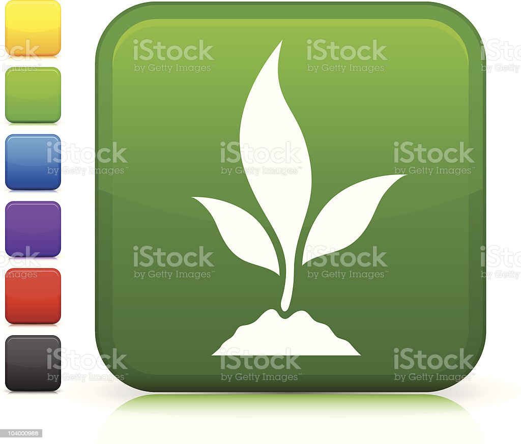 young plant square icon royalty-free stock vector art