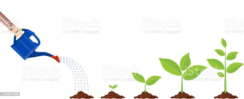 Young plant with watering can vector art illustration