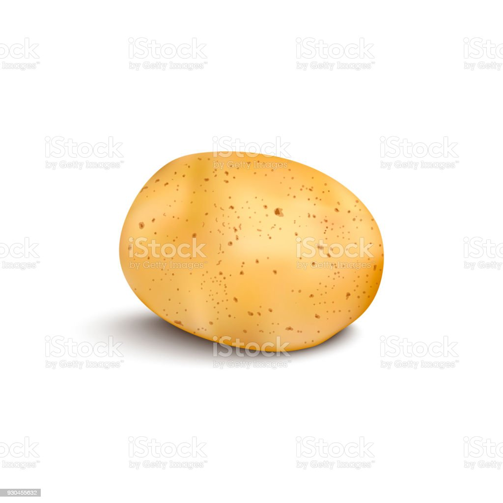 Young potato isolated on white background. Harvest new. Flat lay, top view vector art illustration