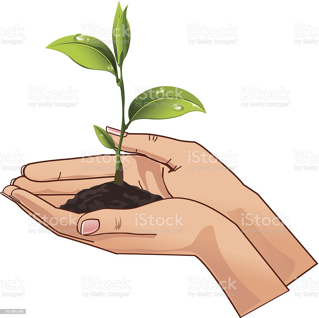 Young seedling in hands royalty-free stock vector art