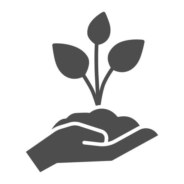 Young sprout with three leaves in hand solid icon, save nature concept, seedling with handful of soil on human palm sign on white background, young plant icon, glyph style. Vector graphics. Young sprout with three leaves in hand solid icon, save nature concept, seedling with handful of soil on human palm sign on white background, young plant icon, glyph style. Vector graphics scooping stock illustrations