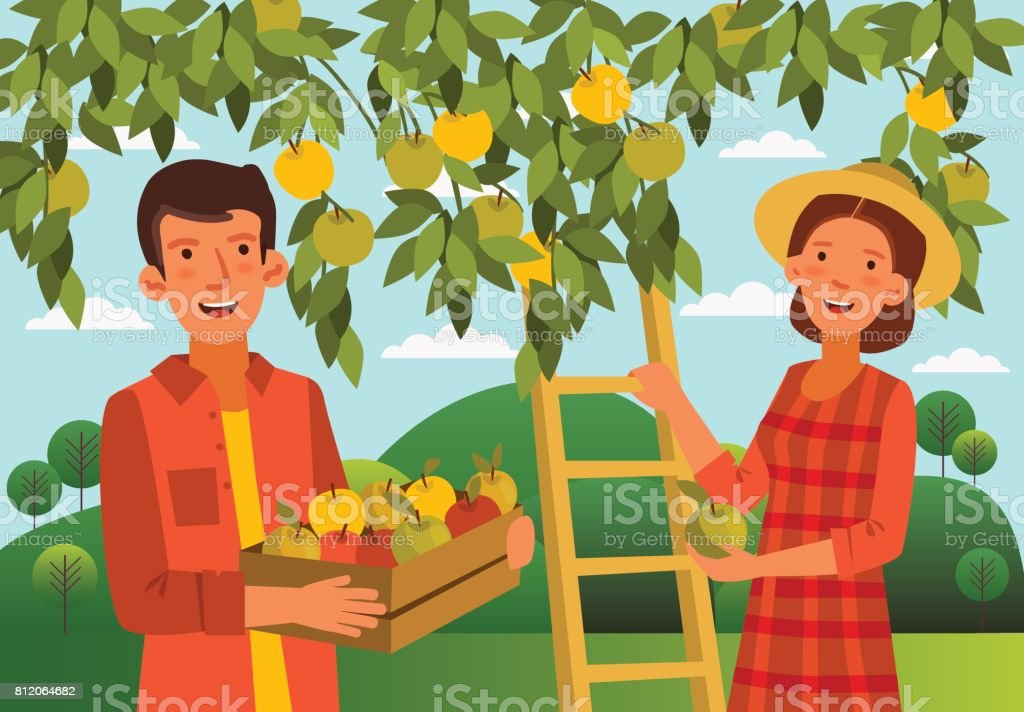 Young woman and man gathers apples in the garden. Summer landscape background vector art illustration