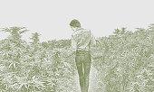 istock Young woman farmer harvesting hemp plants 1181759489