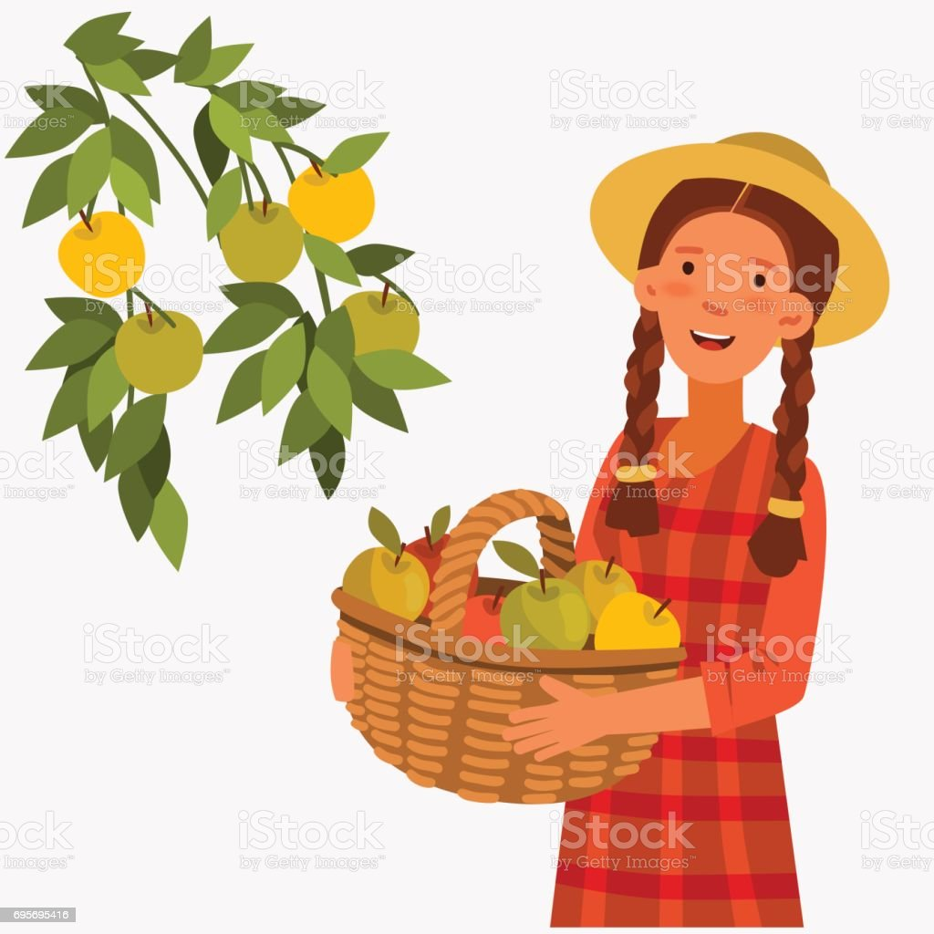 Young woman in a garden, holding a basket of apples vector art illustration