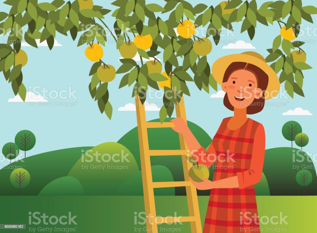Young woman in a garden picking an apple from the tree vector art illustration