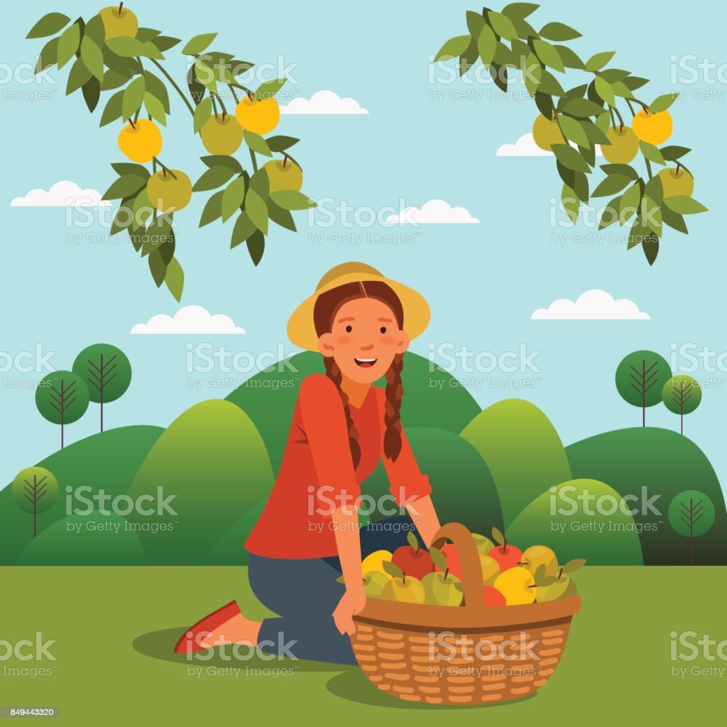 Young woman in a garden with a basket full of fresh apples vector art illustration