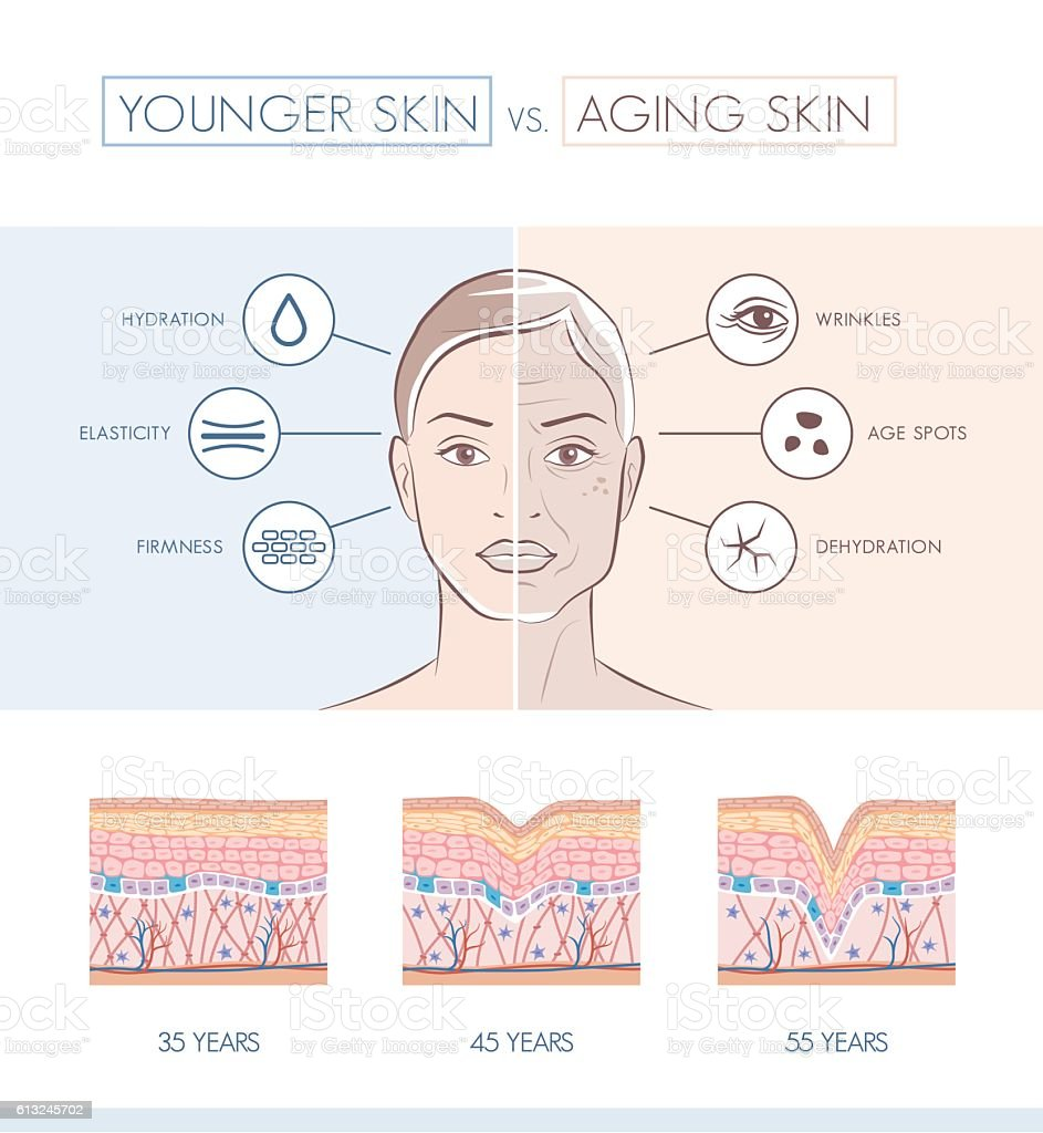 Younger and older skin comparison vector art illustration