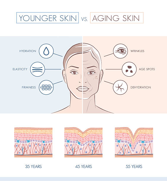 younger and older skin comparison - beauty stock illustrations, clip art, cartoons, & icons