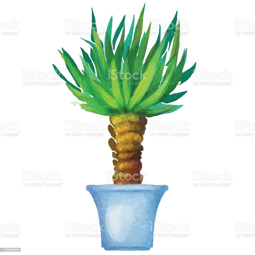 Yucca Aquarelle Plante Dinterieur Dans Un Pot De Fleur Cliparts