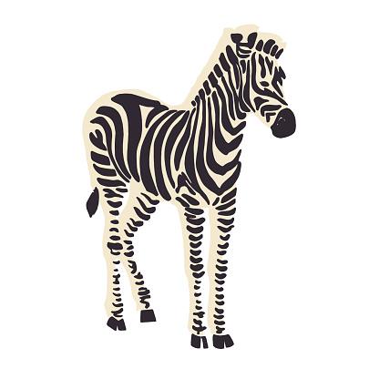Zebra animal illustration graphic resource
