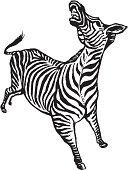 Zebra Bucking