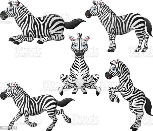 Zebra cartoon set collection vector id586356326?b=1&k=6&m=586356326&s=612x612&h=pmbw tmcdlnhaa4mwrwpkido6s2o8ozv8sgjuss3k a=