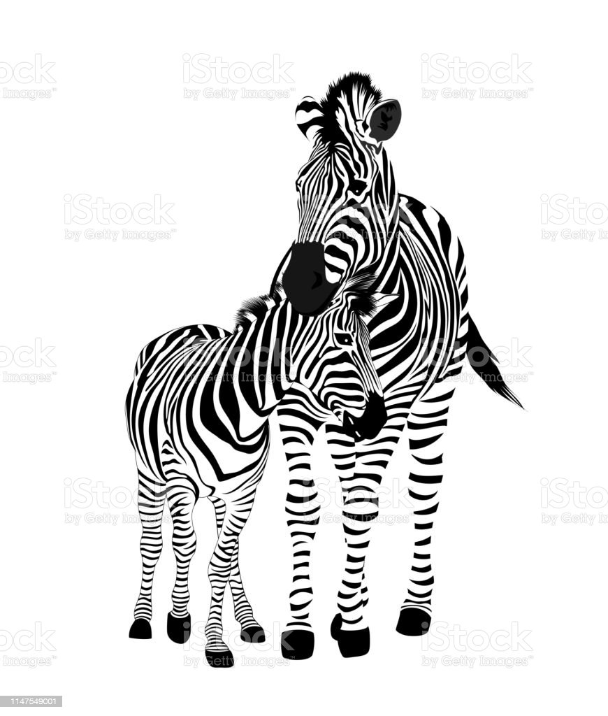 Striped black and white. Vector illustration isolated on white...