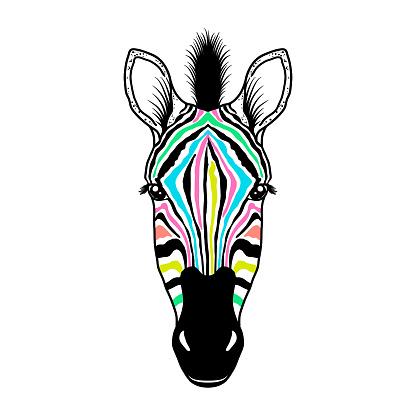 Zebra head on white